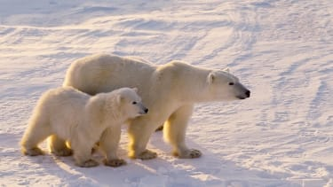 31 animal species given U.N. protection status