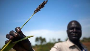 A dead crop in South Sudan.