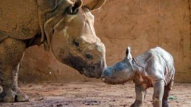 Oklahoma City Zoo welcomes baby rhino
