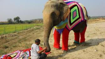 Elephants in sweaters.