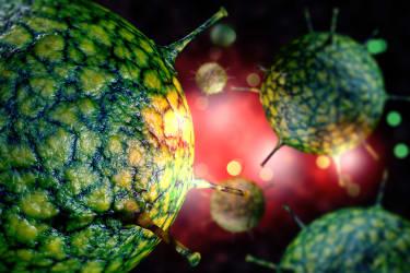 Common cold-causing rhinovirus.