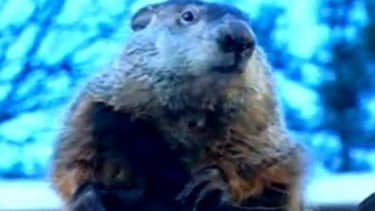 Spring may be just around the corner, according the nation's rodent meteorologist, Punxsutawney Phil, who is rarely right.