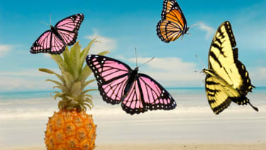 Pineapple and butterfly
