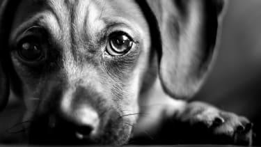 Pupppy eyes.