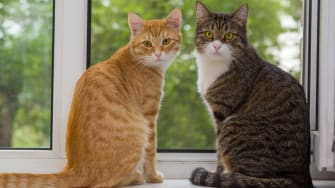 ISIS has prohibited cats from having sex indoors.