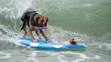 The most adorably radical action shots from the annual surfing dog competition