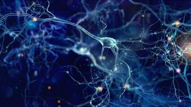 Neuron cells.