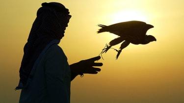 Man releasing falcon.