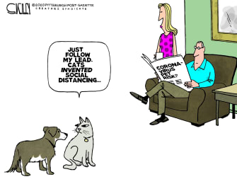 Editorial Cartoon U.S. Coronavirus COVID-19 cats dogs social distancing transmission