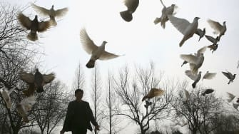 A man feeds doves at a park in China's Jiangsu province.
