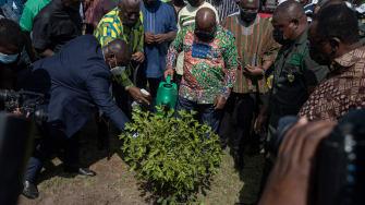 Planting trees in Ghana.