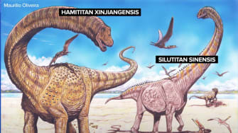 An illustration of two new dinosaur species found in China.