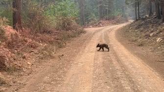A bear cub.