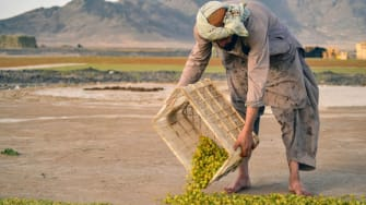 Afghan farmer.