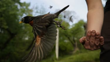 A bird flying.