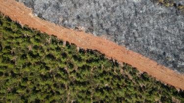 Burnt trees.