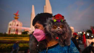 A cat in Thailand.