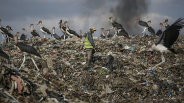 A recycling scavenger walks among storks in Nairobi.