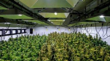 Marijuana grow warehouse