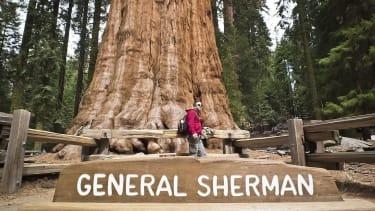 The General Sherman tree.