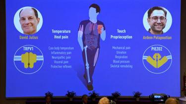 2021 Nobel Prize in Physiology or Medicine
