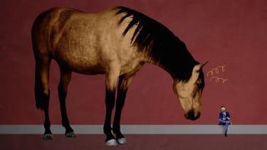 A horse.