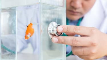 A fish doctor.