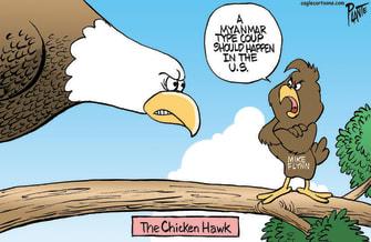 Flynn the chicken hawk