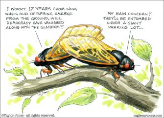 Cicada thoughts